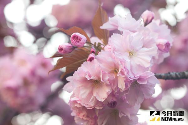 花粉 今日