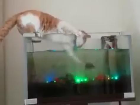 ▲抓魚的絕頂工夫 這隻偷魚貓肯定是慣犯。(圖/翻攝自臉書)