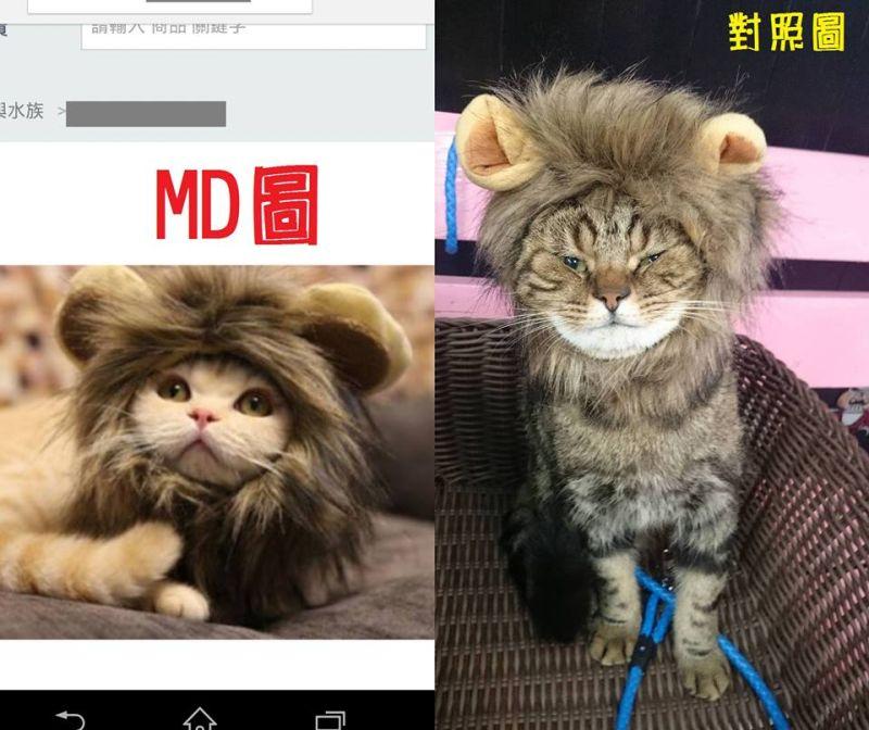 ▲網購喵星人的獅子裝,穿上變這樣主人笑翻。(圖/翻攝自爆料公社)