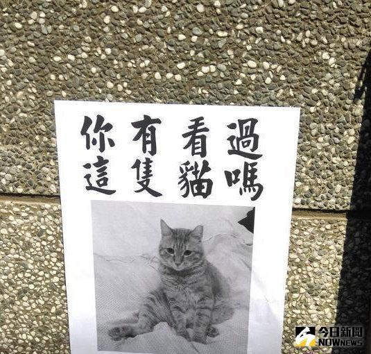 ▲愛貓協尋廣告,仔細一看...令人傻眼。(圖/翻攝自批踢踢)