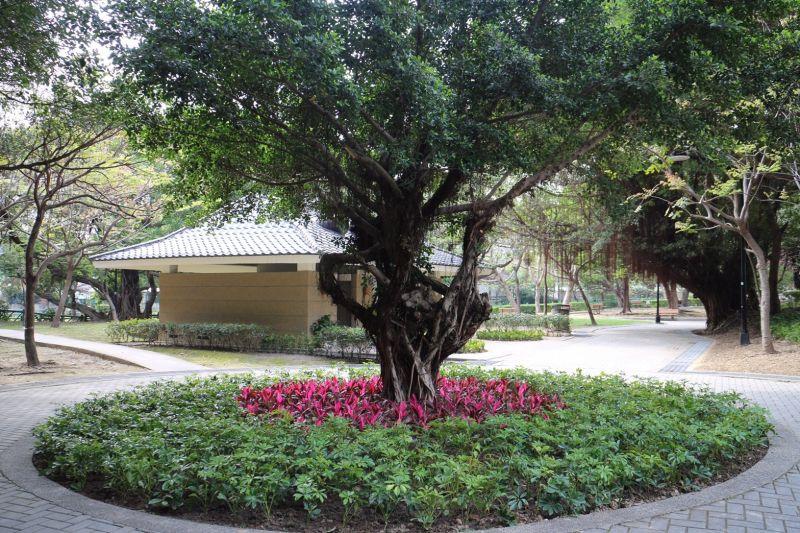 ▲七星公園大榕樹底下綠美化。(圖/公園處提供)