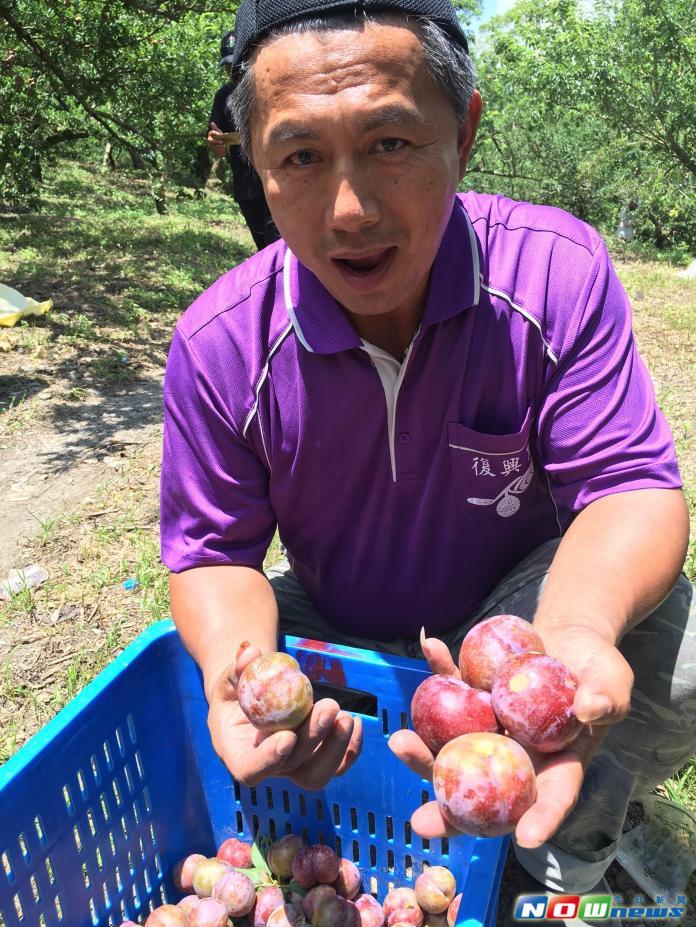 ▲江維明說,歡迎民眾給予在地果農機會,成熟的果實,需要你我一起來享用,歡迎宅配訂購。(圖/記者宋德威攝,2017.06.08)