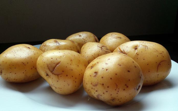 ▲沒有發芽的馬鈴薯並沒有毒素。(圖/取自Peakpx)