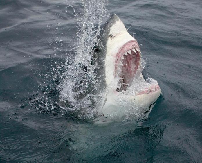 ▲美國女子遭到大白鯊攻擊。(圖/翻攝自The Sun)