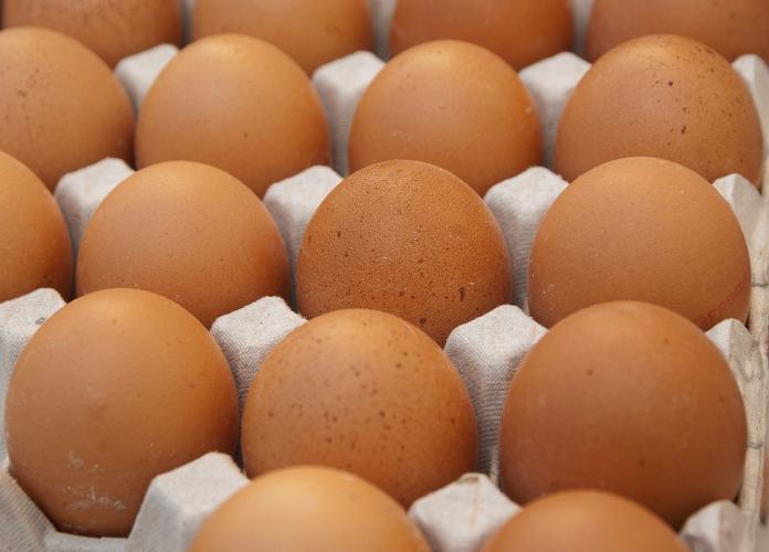 驗出致癌物「蘇丹紅」 雲林撲殺7千隻鴨