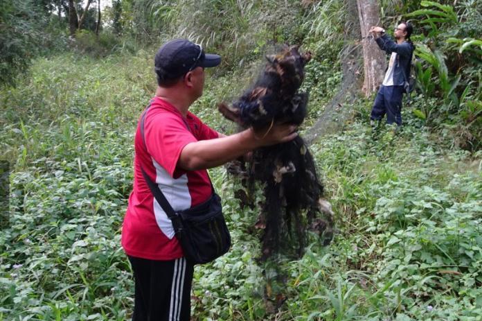 林地內違法架設鳥網 林務局拆除
