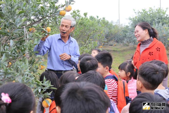斗六年節應景農產<b>生態教學</b> 孩童鮮採茂谷柑體驗田園點滴