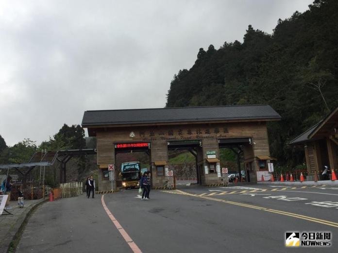 賞<b>櫻王</b>看帝雉 25日上阿里山一次滿足
