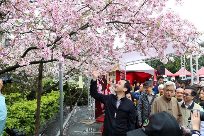 天元宮櫻花浪漫綻放 粉色花朵滿布山頭