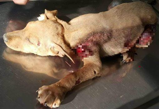 痛心!<b>幼犬</b>遭「鐵鍊、捕獸夾」栓機車 高速拖行全身傷