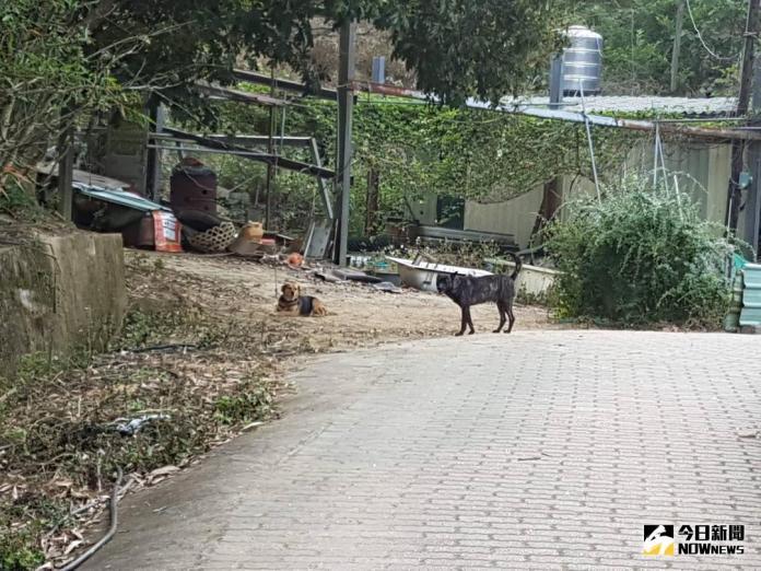 散步慘遭野狗偷襲 寶山水庫環湖步道藏危機