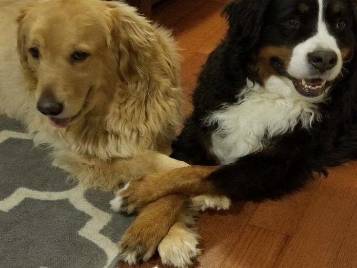 狗狗好友總愛牽對方的手 甜滋滋互動看了都融化!