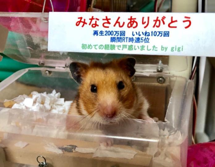 日本狂人打造心愛<b>倉鼠</b>最強豪宅 還附帶天天健身計畫