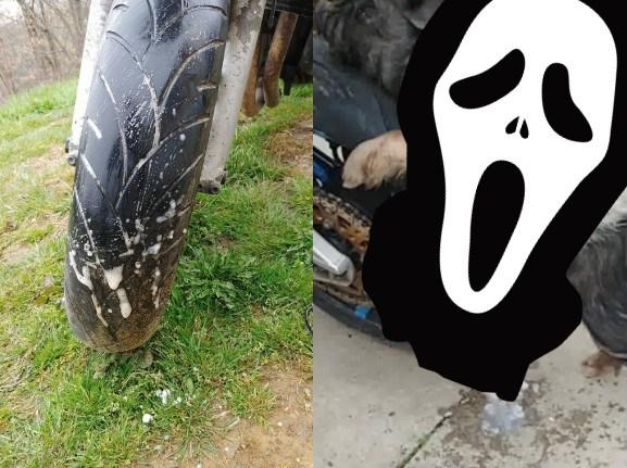 ▲外國一名網友的愛車輪胎遭到「硬上」,凶手竟是一隻豬。(圖/翻攝自臉書)