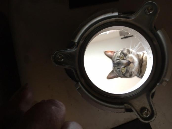 房東修水槽 貓咪<b>好奇</b>探頭:你在做什麼呀?