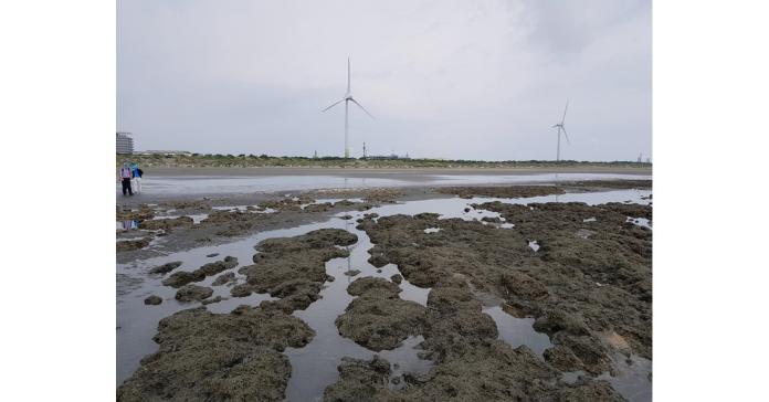藻礁公投持續發燒 中油5點說明打臉環團