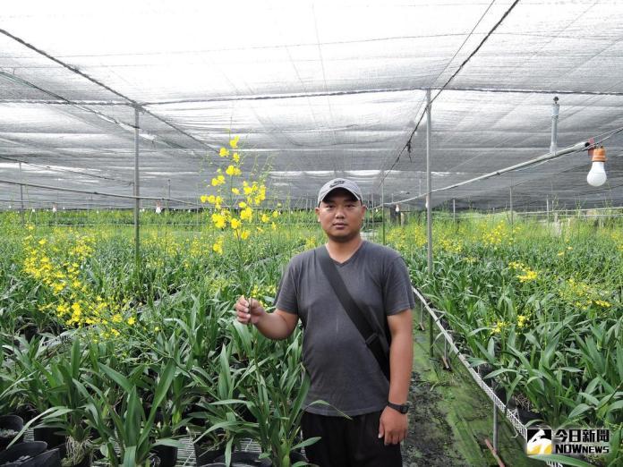▲文心蘭農場的花農陳帝緯創下年產量約50多萬支(圖/市政府提供 , 2018.7.27\\)