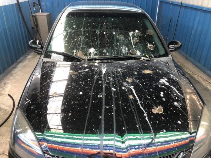 哭!剛洗車被小鳥集體「烙賽」 他無奈:占到牠們地盤?