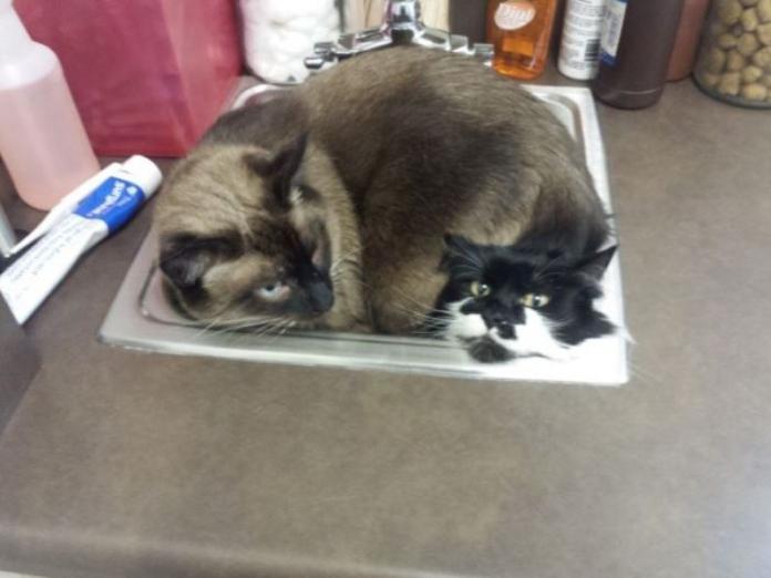 <b>看醫生</b>初體驗 貓兄弟怕怕爭相躲水槽!