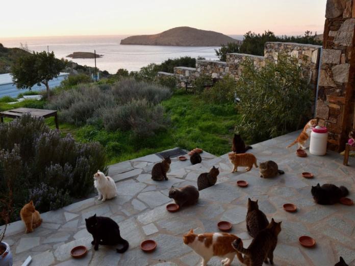 貓奴的<b>夢幻工作</b> 希臘小島當貓管家笑擁55隻貓和無敵