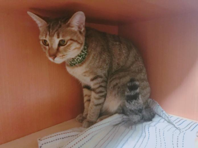 ▲殯葬咖啡店內養著可愛貓咪,撫慰每一位客人的心。(圖/記者汪瑋琪攝)