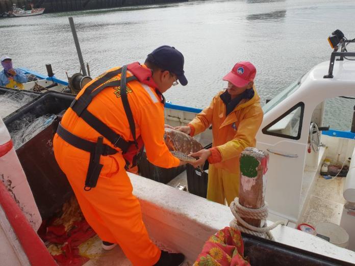 金門岸巡救海龜