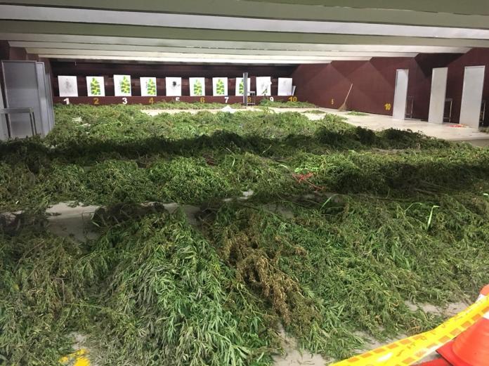 台東查緝全台面積最廣大麻園 市值超過2億元