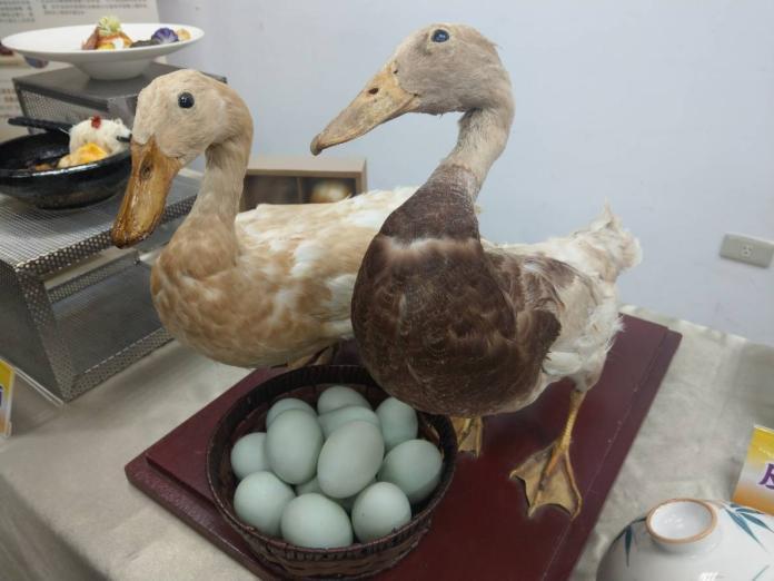 台灣鴨產蛋率世界第一 鴨農:很多國家都想技轉