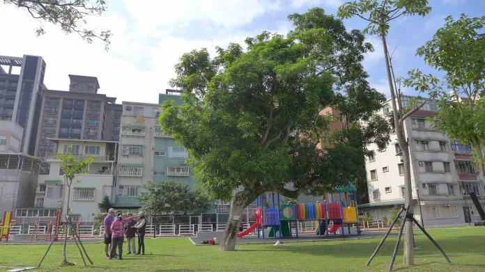 N2018122606老芒果樹