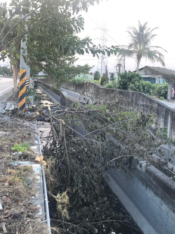 工人路樹修剪偷懶 溪州鄉莿仔埤圳溝渠堆滿廢棄枝葉