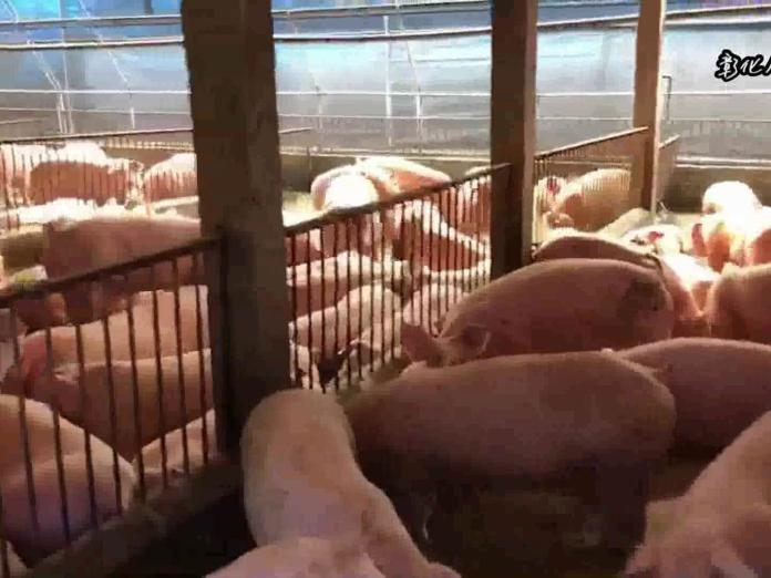 防非洲豬瘟