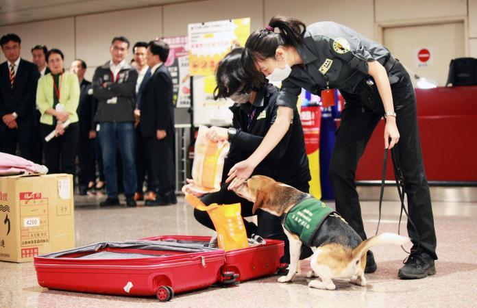 機場檢疫犬