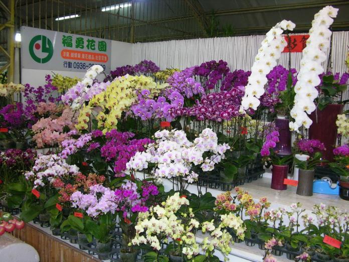 國光花市春節期間不打烊 農產、年貨應有儘有
