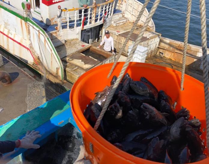 ▲高雄在地優質漁產品深獲國外市場青睞,上月外銷金額近3億元。(圖/記者黃守作攝,2019.02.13)