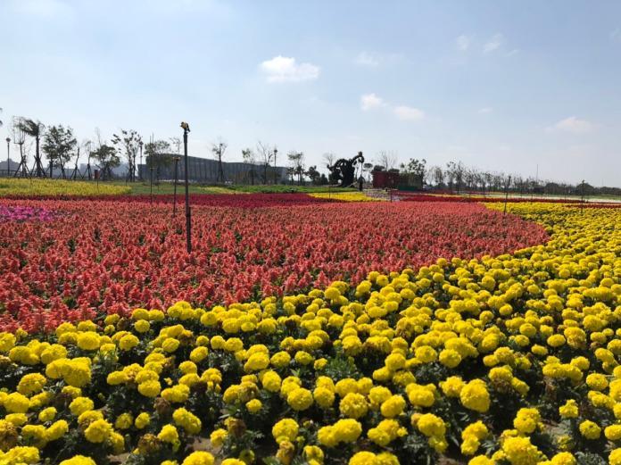 ▲南院園區內的向日葵、薰衣草等形成繽紛的美麗花海。(圖/故宮南院提供 )