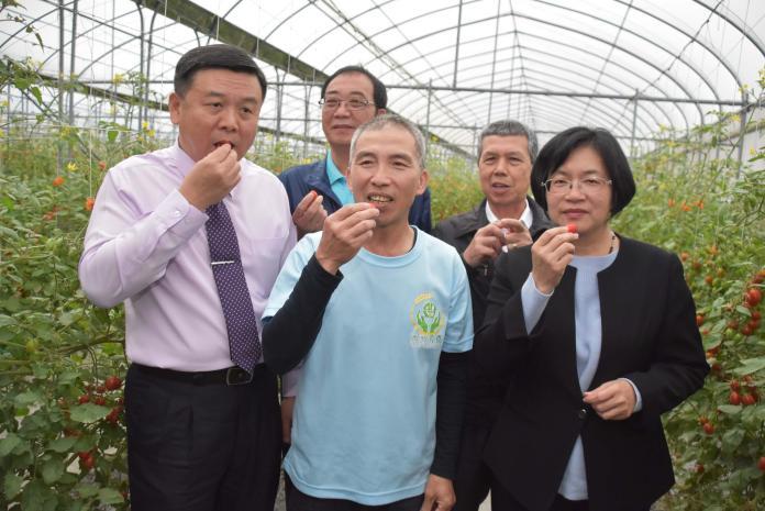 影/舉辦冠軍蕃茄果園觀摩會 打響彰化小蕃茄知名度
