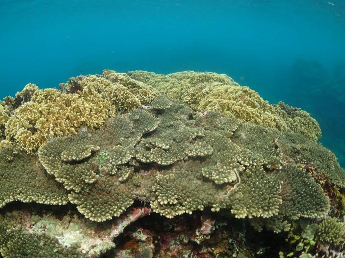 海洋在哭泣!珊瑚礁分析僅200字 寶盛遊樂區將動工