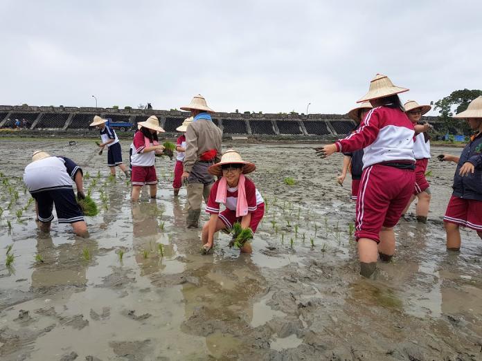 傳承經驗營造地景 壯圍耆老與學童一起插秧<b>彩繪稻田</b>