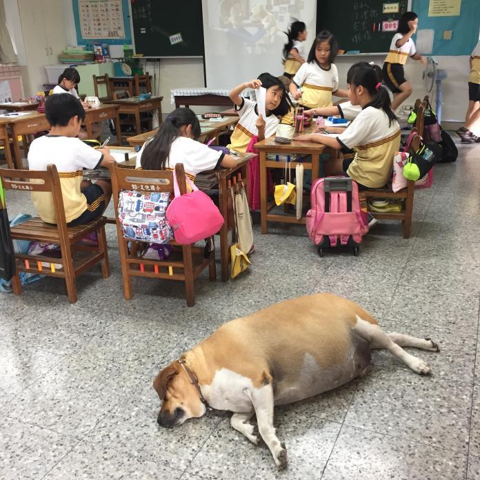 超人氣校犬「<b>小白襪</b>」生病了 手術後要做這件事......