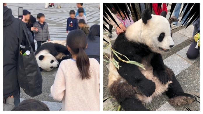 不在高雄!<b>貓熊</b>在東京馬路上躺平 民眾零距離圍觀超驚訝