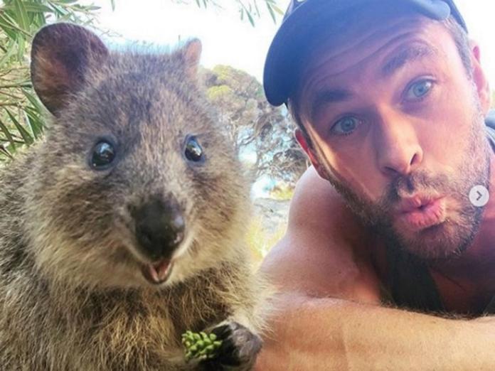 雷神克里斯漢斯沃造訪澳洲小島 和短尾矮袋鼠比萌!