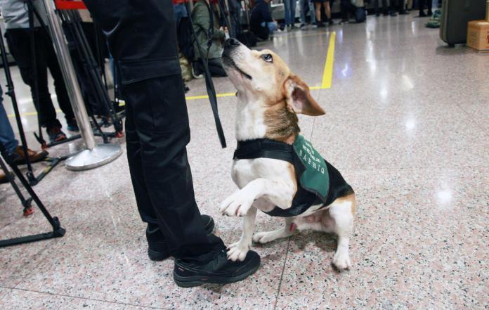 入境華僑攻擊檢疫犬