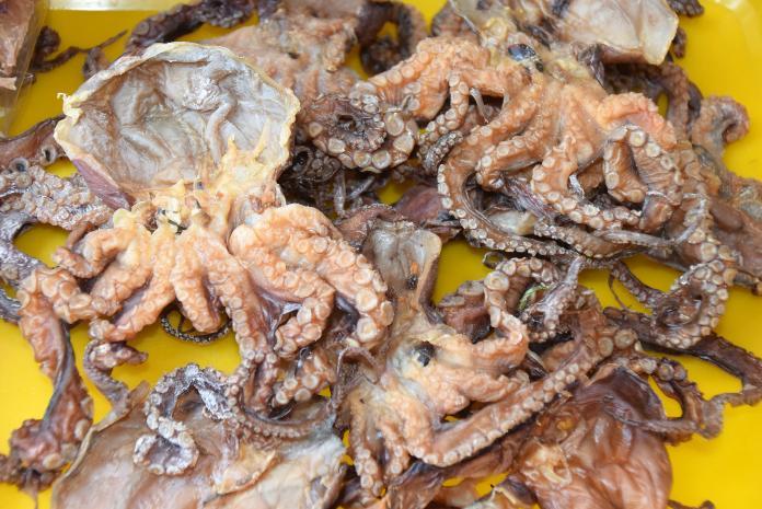 澎湖特有種小章魚潮間帶出沒 產量少價格直線飆高