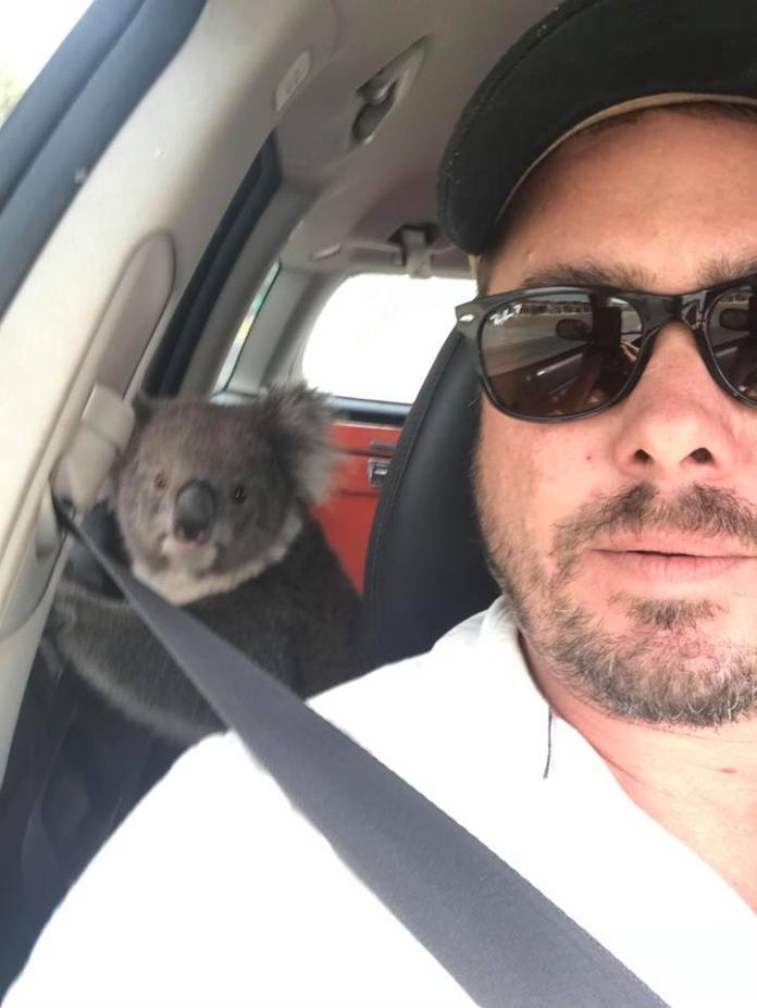 他把握機會先和無尾熊自拍一張。(圖/facebook@tim.whitrow)