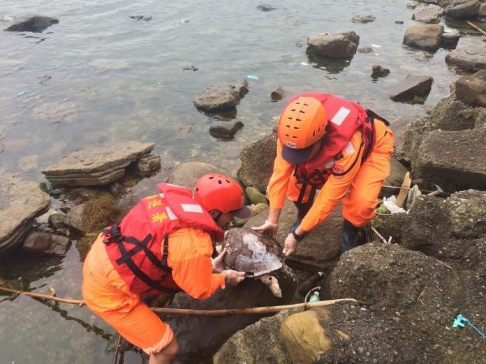 新北海岸今年驚現多隻綠蠵龜屍體 專家曝死亡原因…