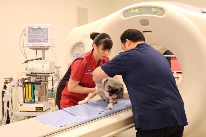 飼主注意!毛小孩罹癌率高 陽明首創寵物正子斷層掃描