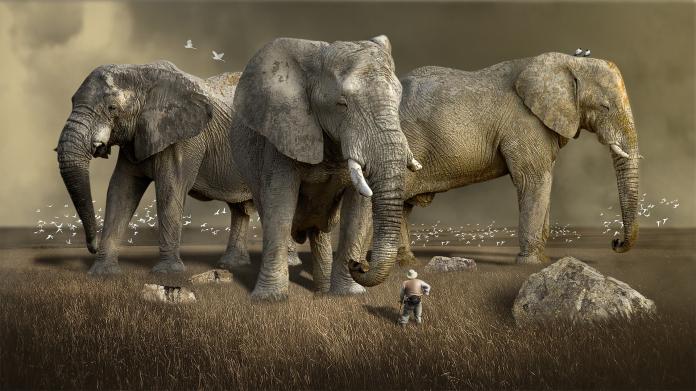 闖國家公園欲獵犀牛角 象獅聯軍發動突襲<b>盜獵</b>者屍骨無存
