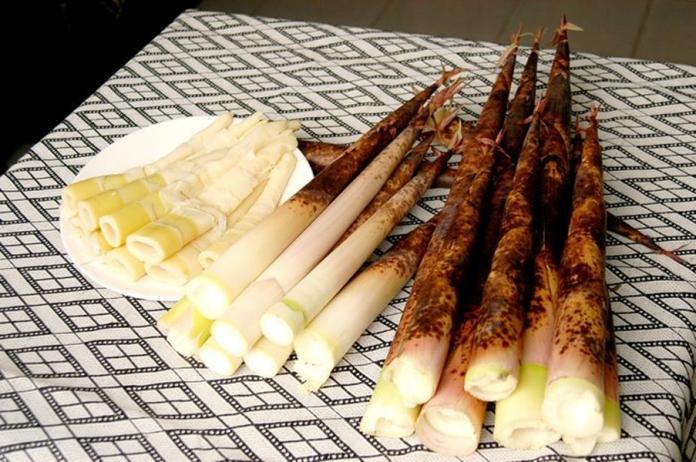 ▲桂竹筍,享用食物的原形而且高纖低熱量、營養價值高。(圖/農糧署提供)