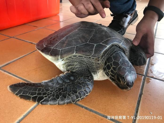 海洋浩劫!海保署統計:前三月82隻海龜、47隻<b>鯨豚</b>死亡