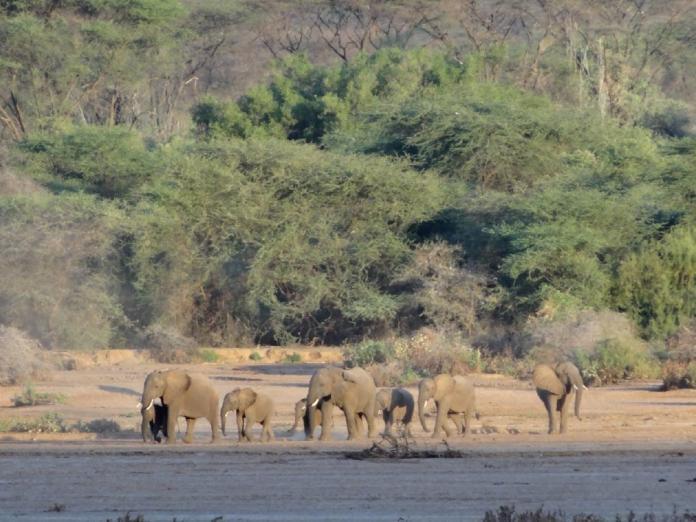 (照片由Milgis Trust提供)唐獎得主布倫特蘭夫人將唐獎研補費運用捐助非洲自然環境保育工作,讓原本遭濫殺面臨存亡危機的大象「成群回來了」。